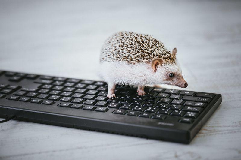 パソコンのキーボードを選ぶ時のポイント