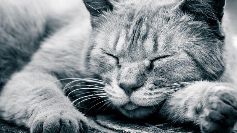 眠れない人に試してほしい速やかな睡眠導入と中途覚醒対策