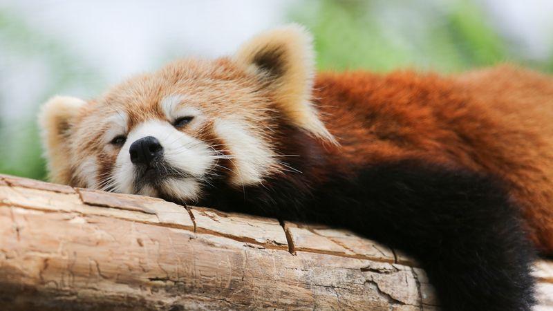 より深い睡眠へと誘う方法
