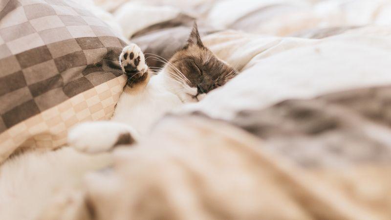 睡眠がもたらす人体への様々な影響とは?